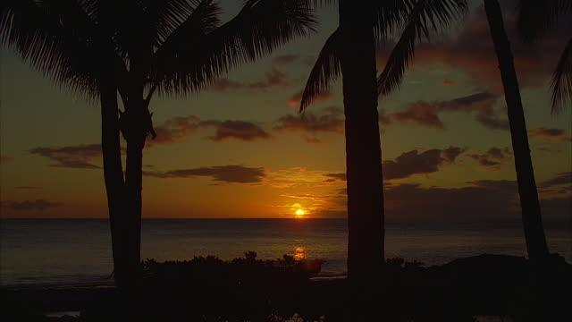 stockvideo's en b-roll-footage met ms, sunset over ocean, hawaii, usa - waaierpalm