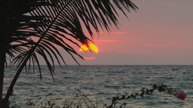 WS Sunset over ocean, silhouette of palm leaf in foreground / Nosy Be, Madagascar