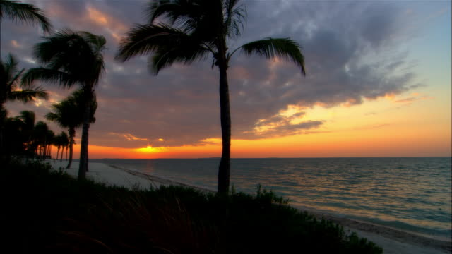 ws, sunset over ocean, silhouettes of palm tree and grass in foreground, key west, florida, usa - fan palm tree stock videos & royalty-free footage