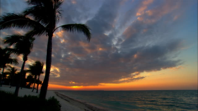 ws, sunset over ocean, silhouettes of palm trees in foreground, key west, florida, usa - key west stock videos & royalty-free footage