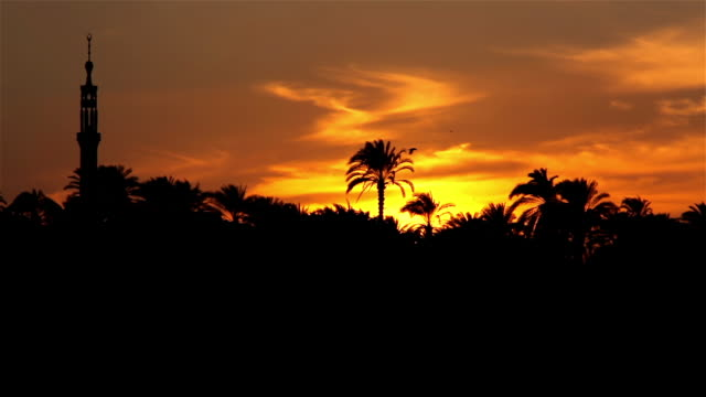sunset over river nile river - palm tree stock videos & royalty-free footage