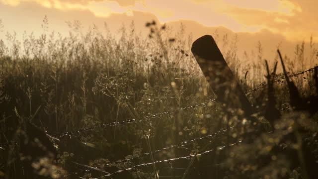 sonnenuntergang über der landschaft englands - ranunkel stock-videos und b-roll-filmmaterial