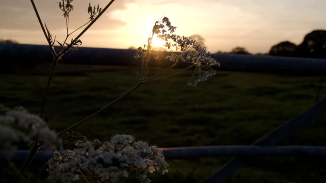 sunset over the british countryside with electric fence - english culture stock videos & royalty-free footage
