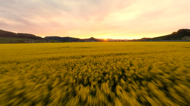 stockvideo's en b-roll-footage met hd heli: sunset over the canola field - aangelegd