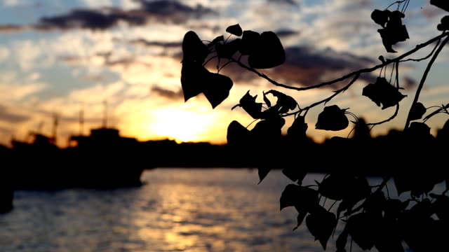 sunset over the river - buenos aires stock videos & royalty-free footage