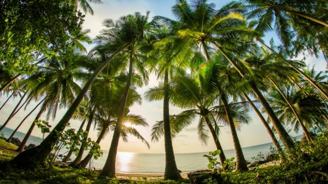 vídeos y material grabado en eventos de stock de puesta de sol sobre el mar detrás de las palmeras - palmera