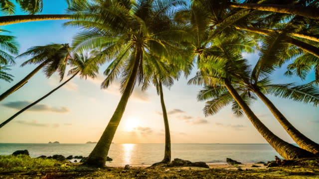 sunset over the sea behind palms - sunset to night time lapse stock videos & royalty-free footage