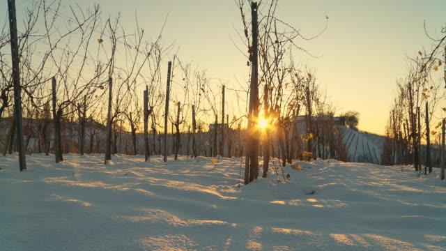 hd :dolly 夕暮れの雪で覆われたブドウ園 - つる草点の映像素材/bロール