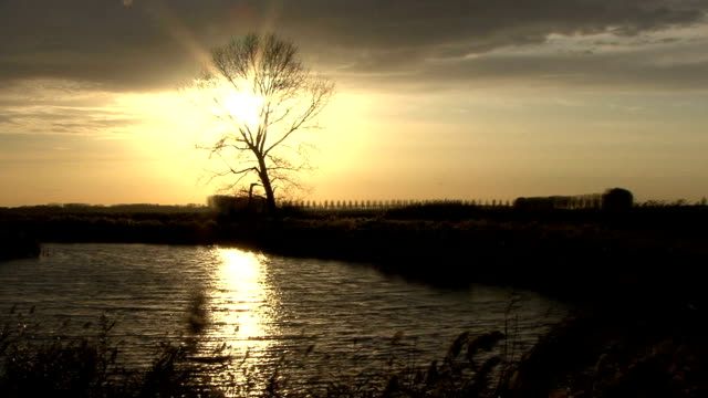 sunset over typical, windy, dutch polder landscape. - polder stock videos and b-roll footage