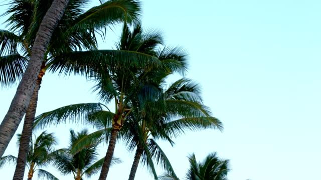Sunset Palm Trees Kauai Hawaii