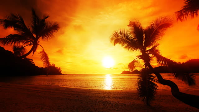 sunset , palms, ocean. - palm leaf stock videos & royalty-free footage