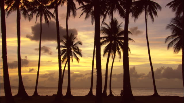 Sunset, palms silhouette, Chuuk Lagoon, South Pacific