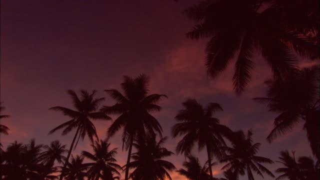 Sunset, palms, tilt down. Chuuk Lagoon, South Pacific
