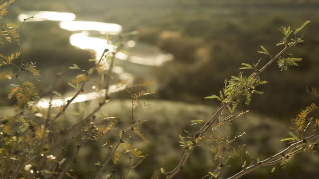 sunset pan on vegetation in foreground, rio grande river in background - valley stock videos & royalty-free footage