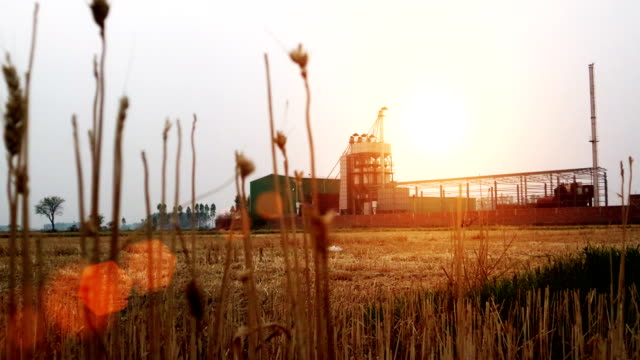 sunset rice mill production factory, india - rice cereal plant stock videos & royalty-free footage