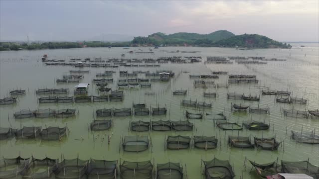 sunset scene aerial drone view movie of fish farming in lake, songkhla, thailand - harvesting stock videos and b-roll footage