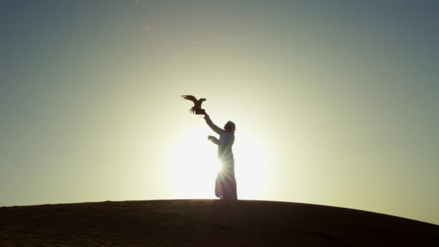 sunset silhouette arabic man with bird of prey - hunting stock videos & royalty-free footage