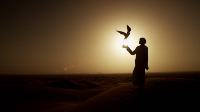 sunset silhouette arabic man with bird of prey - 絶滅の恐れのある種点の映像素材/bロール