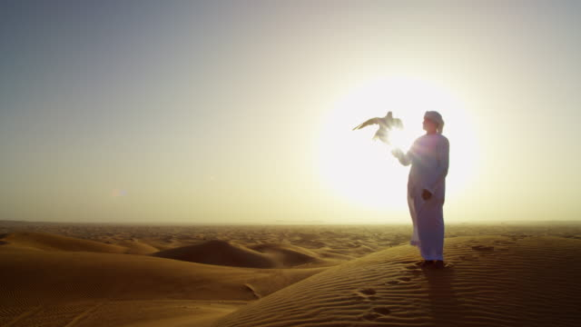 sunset silhouette arabic man with bird of prey - bird of prey stock videos & royalty-free footage