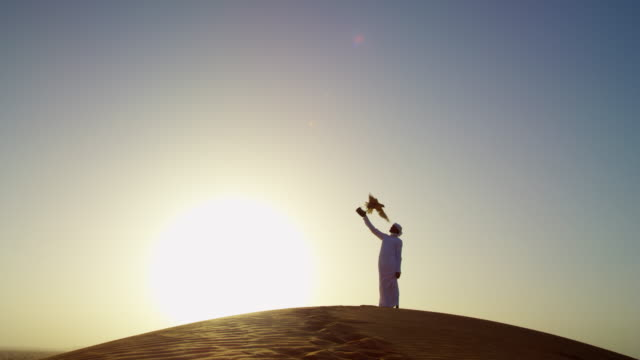 sunset silhouette arabic man with bird of prey - saudi arabia stock videos & royalty-free footage