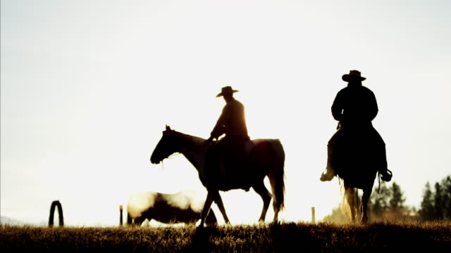 sunset silhouette cowboy riders in forest wilderness canada - cowboy stock videos & royalty-free footage