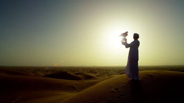 sunset silhouette falcon on male arab owners glove - bird hunting stock videos & royalty-free footage