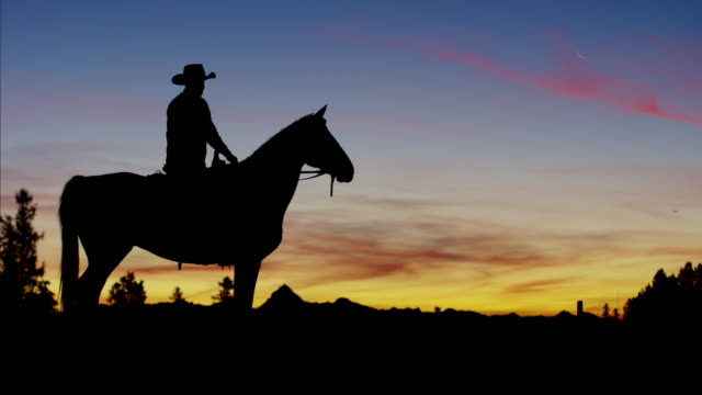sunset silhouette of cowboy rider in forest canada - cowboy stock videos & royalty-free footage