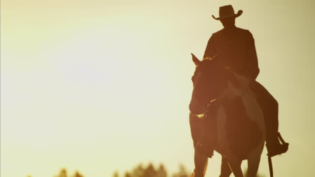 sunset silhouette of cowboy riders forest wilderness canada - カウボーイ点の映像素材/bロール