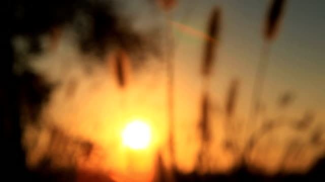 sunset - silhouettes - bulrush stock videos & royalty-free footage