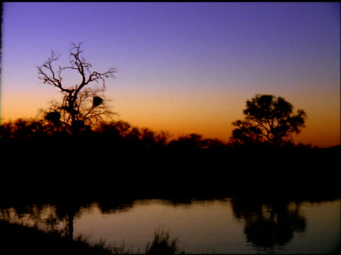 sunset sky and silhouetted trees reflected in lake, botswana - wirbeltier stock-videos und b-roll-filmmaterial