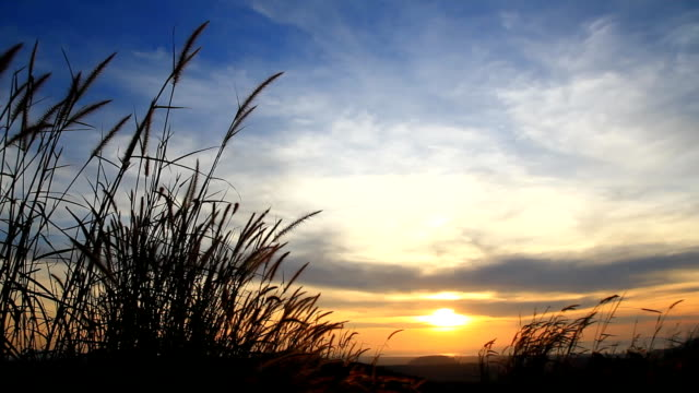 sunset / sunrise on the hill. - radio controlled handset stock videos and b-roll footage