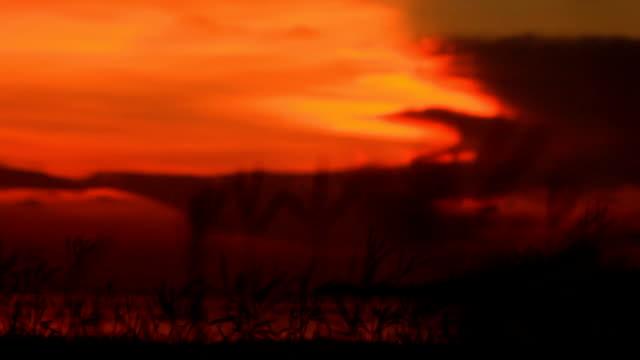 サンセット/の日の出の海。 - バージニア州 オレンジ市点の映像素材/bロール