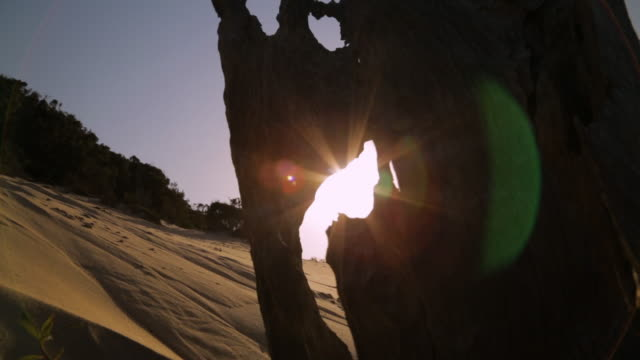 sunset through a dead beach stump, qld island - weathered stock videos & royalty-free footage