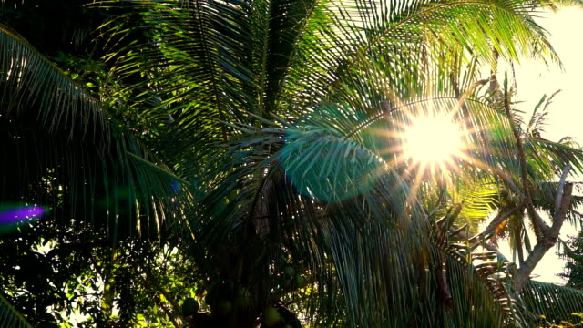 sunset through coconut palm tree, ko lanta, thailand - coconut palm tree stock videos & royalty-free footage