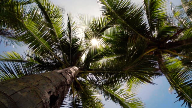 sunset through coconut tree - coconut palm tree stock videos & royalty-free footage