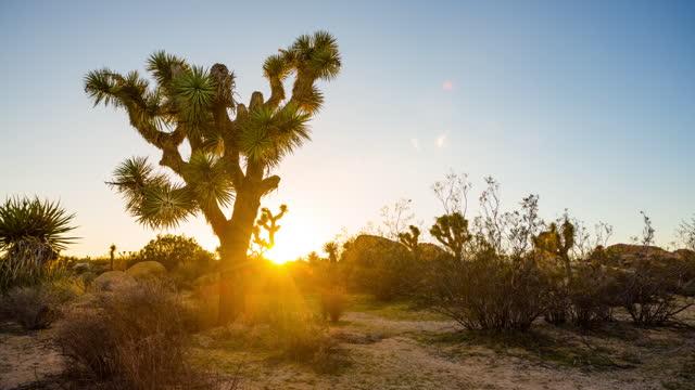 sunset through joshua tree - tracking time lapse - joshua tree stock videos & royalty-free footage