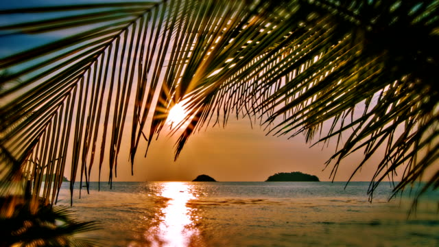sunset through palm tree - caribbean stock videos & royalty-free footage