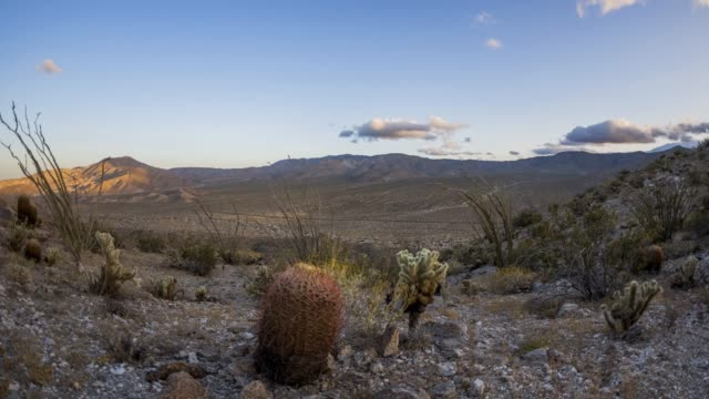 sunset through sunrise in the anza-borrego desert - barrel cactus stock videos and b-roll footage