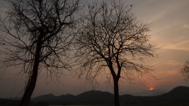 sunset through tree silhouette - realisticfilm stock videos and b-roll footage