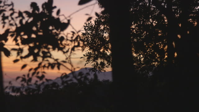 sunset through trees - malaysia stock videos & royalty-free footage