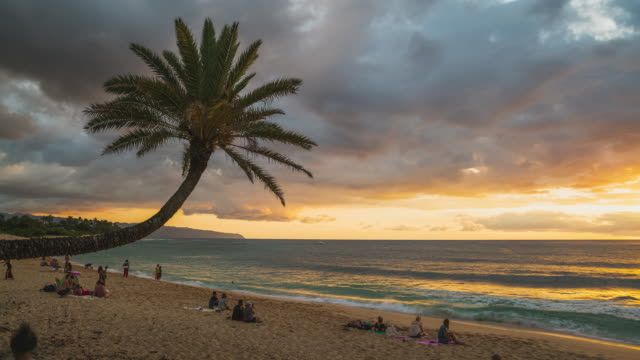 "sunset timelapse at ""the crooked palm tree"" on sunset beach, haleiwa, oahu, hawaii - hawaii islands stock videos and b-roll footage"