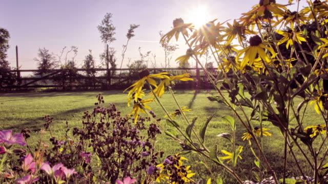 SLIDER; Sunset timelapse through garden flowers