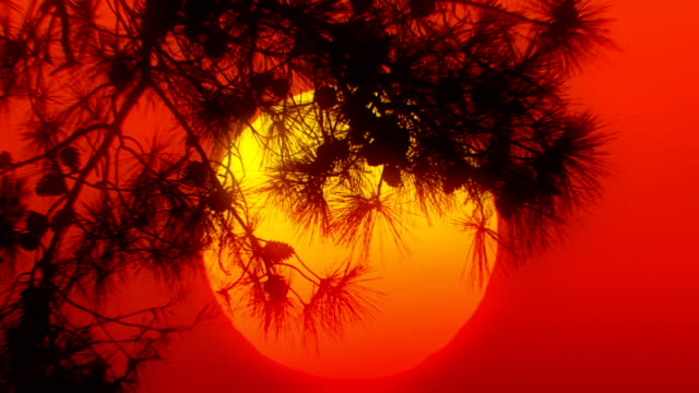 sunset tree (loopable) - loopable moving image stock videos & royalty-free footage