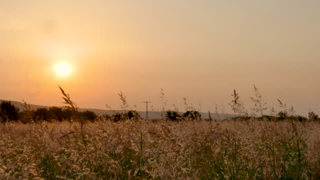 sunset - hay field stock videos & royalty-free footage