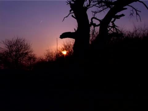 vidéos et rushes de coucher du soleil - arbre à feuilles caduques