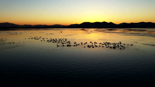 sunset view of junam reservoir (habitat for migratory birds in south korea) and migratory birds in gyeongsangnam-do, changwon - migrating stock videos & royalty-free footage