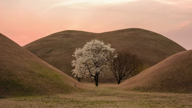 sunset view of the magnolia tree at daereungwon ancient tombs(tombs of kings and nobles of the silla kingdom) in gyeongju, north gyeongsang province - north gyeongsang province stock videos & royalty-free footage