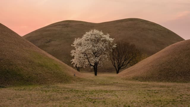 sunset view of the magnolia tree at daereungwon ancient tombs(tombs of kings and nobles of the silla kingdom) in gyeongju, north gyeongsang province - gyeongju stock videos & royalty-free footage