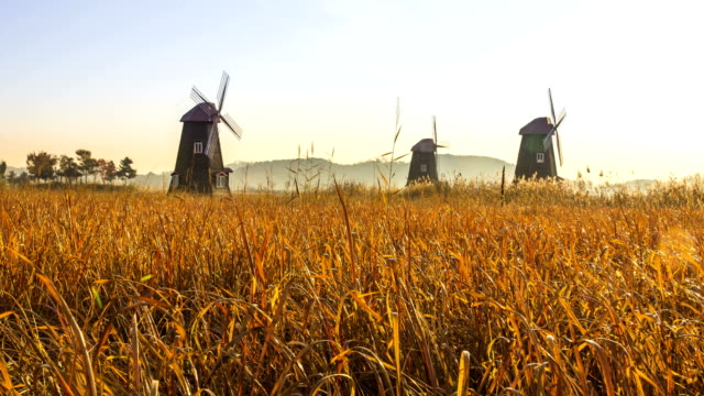 sunset view of windmill on the reeds in sorae eco park, in incheon - mill stock videos & royalty-free footage