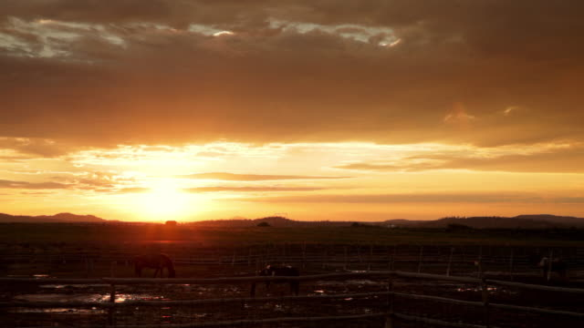 sunset views of animals in a rodeo - orange colour stock videos & royalty-free footage